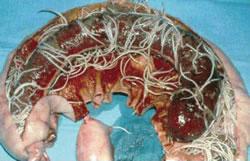 Colic Westvets Veterinary Practice